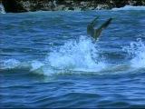ВВС: Большая белая акула